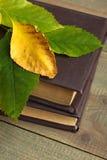 Boeken met bladeren Stock Foto's