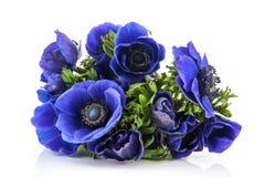 Boeket blauwe Anemonen Stock Foto
