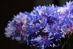 Boeket met blauwe korenbloemen De mening van de close-up De zomerbloemen op zwarte achtergrond stock afbeelding