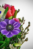 Boeket Purpere anemoon Stock Foto