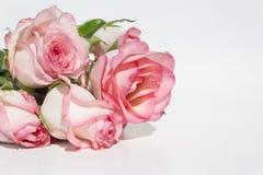 Boeket roze rozen op witte achtergrond Stock Afbeeldingen