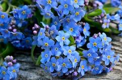 Boeket van blauw vergeten-me op een houten achtergrond Royalty-vrije Stock Foto