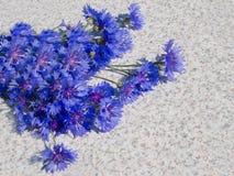 Boeket van blauwe korenbloemen Royalty-vrije Stock Afbeeldingen