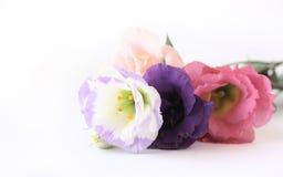 Boeket van bloemen Royalty-vrije Stock Fotografie