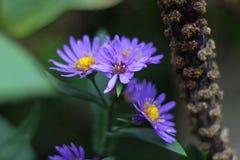 Boeket van bloemen Stock Fotografie
