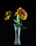 Boeket van Bloemen in een Vaas die op Zwarte B wordt geïsoleerd Royalty-vrije Stock Afbeelding