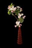 Boeket van bloemen en bloesems van kersen Stock Foto