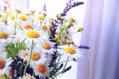 Boeket van bloemenmadeliefjes Royalty-vrije Stock Foto's