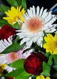 Boeket van de bloemen van de Chrysant Stock Fotografie