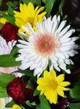 Boeket van de bloemen van de Chrysant Stock Foto