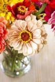 Boeket van de bloemen van Zinnia Royalty-vrije Stock Afbeeldingen