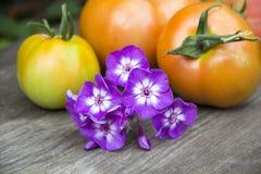 Boeket van de Flox van de zomerbloemen op de achtergrond van de tomaat Stock Afbeeldingen