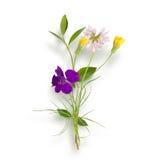 Boeket van de gebieds (wilde) bloemen Royalty-vrije Stock Afbeelding