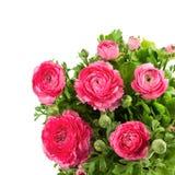 Boeket van de lente roze ranunculus Royalty-vrije Stock Afbeelding