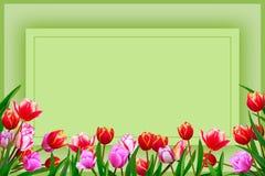 Boeket van de lente verse bloemen, tulpen met multi-colored bloemblaadje Stock Afbeelding