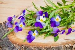 Boeket van de lentebloemen op een besnoeiingsboom Stock Foto