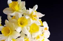 Boeket van de lentebloemen op een donkere achtergrond stock foto's