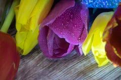 Boeket van de macro van de tulpenclose-up van gele rode en purpere tulpen Royalty-vrije Stock Afbeeldingen