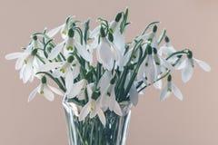Boeket van de sneeuwklokjes van de lentebloemen op beige achtergrond Royalty-vrije Stock Afbeeldingen