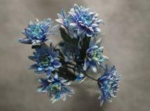 Boeket van donkerblauwe kleuren royalty-vrije stock foto