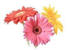 Boeket van drie bloemen Stock Afbeelding