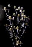 Boeket van droge bloemen Royalty-vrije Stock Afbeeldingen