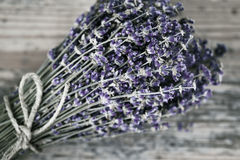Boeket van droge lavendel Royalty-vrije Stock Fotografie