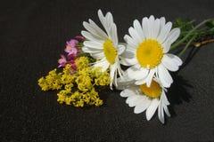 Boeket van gebieds het wilde bloemen stock foto's