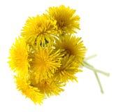 Boeket van gele bloemen. Royalty-vrije Stock Afbeeldingen