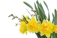 gele narcis bloemen met katjes royalty-vrije stock fotografie