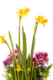 Boeket van gele narcissen en chrysanten Stock Foto's