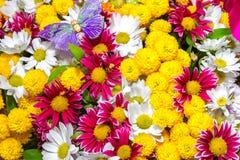 Boeket van gele rozen en witte bloemen en purpere vlinder Royalty-vrije Stock Afbeeldingen