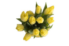 Boeket van gele tulpen Royalty-vrije Stock Afbeelding