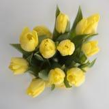 Boeket van gele tulpen Stock Afbeeldingen