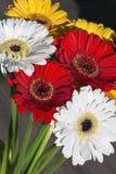 Boeket van gele witte en rode gerberabloemen op de houten achtergrond Royalty-vrije Stock Afbeeldingen