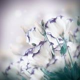 Boeket van gevoelige rozen Stock Foto's