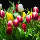 Boeket van heldere tulpenbloei Royalty-vrije Stock Afbeelding