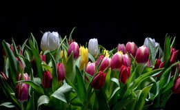 Boeket van heldere tulpenbloei Stock Foto's