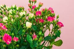 Boeket van kleine gekleurde rozen op een roze achtergrondafbeelding royalty-vrije stock fotografie
