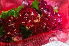 Boeket van kleine rode witte rozen op rode achtergrond Royalty-vrije Stock Fotografie