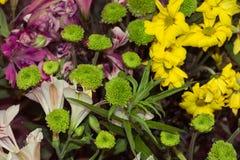 Boeket van kleurrijke bloemen Stock Foto's