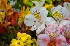 Boeket van kleurrijke bloemen Royalty-vrije Stock Foto's