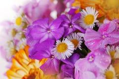 Boeket van kleurrijke bloemen c Royalty-vrije Stock Afbeeldingen