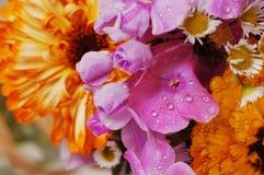 Boeket van kleurrijke bloemen c Royalty-vrije Stock Foto's