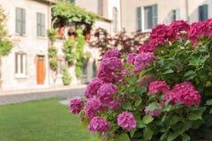 Boeket van kleurrijke bloemen in een tuin Italië Royalty-vrije Stock Afbeelding