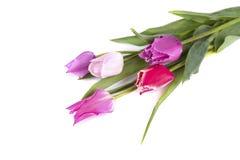 Boeket van kleurrijke die tulpen op witte achtergrond worden geïsoleerd Het boeket van de lente royalty-vrije stock afbeelding