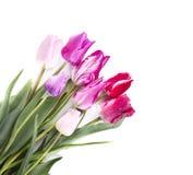 Boeket van kleurrijke die tulpen op witte achtergrond worden geïsoleerd Het boeket van de lente royalty-vrije stock afbeeldingen