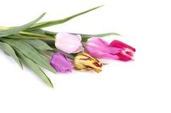 Boeket van kleurrijke die tulpen op witte achtergrond worden geïsoleerd Het boeket van de lente royalty-vrije stock foto's