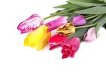 Boeket van kleurrijke die tulpen op witte achtergrond worden geïsoleerd Het boeket van de lente stock fotografie
