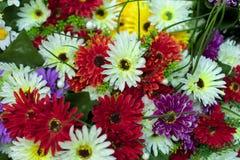 Boeket van kleurrijke multicolored kleurrijke bloemen stock foto